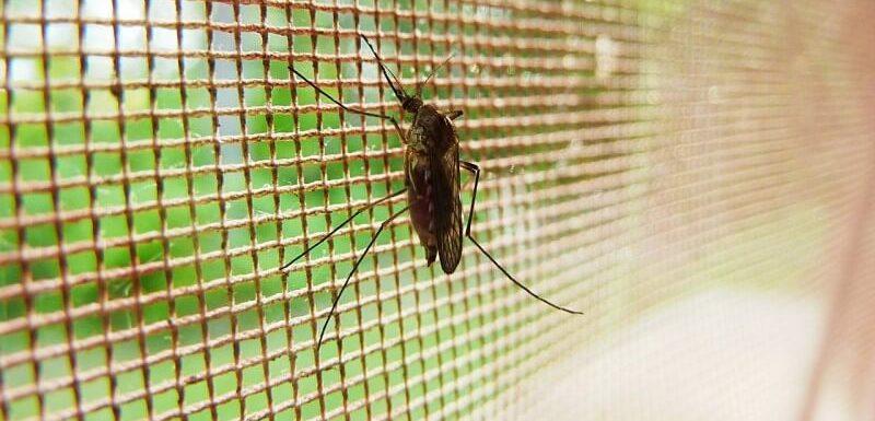 Top 10 Best Mosquito Killer In India